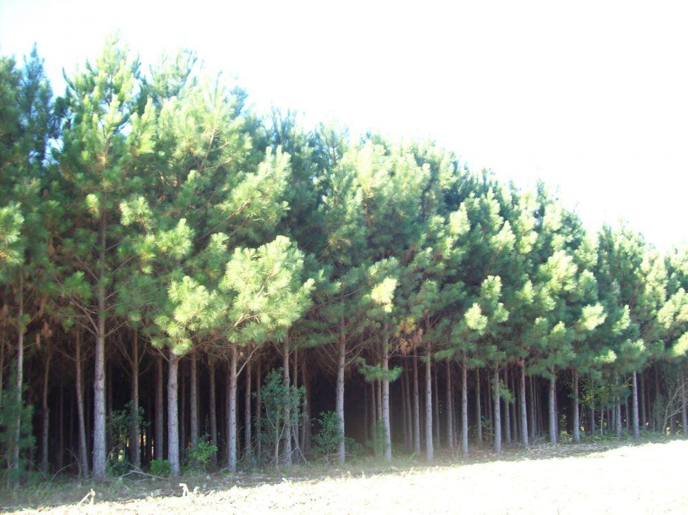 Créditos de reposição florestal sc