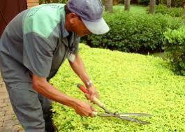 Jardinagem em geral em joinville