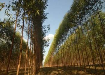 Serviços florestais. Guia de empresas e serviços